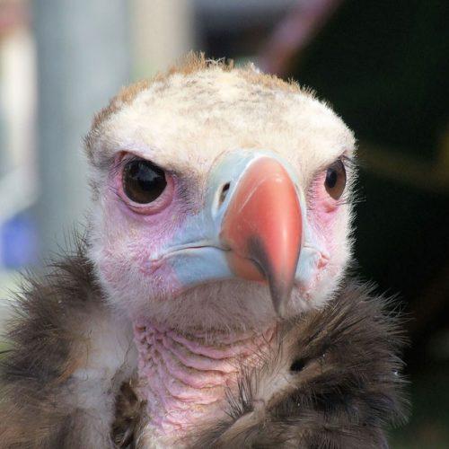 ¿Qué ocurre cuando un pájaro atraviesa la LOS de un enlace de microondas?